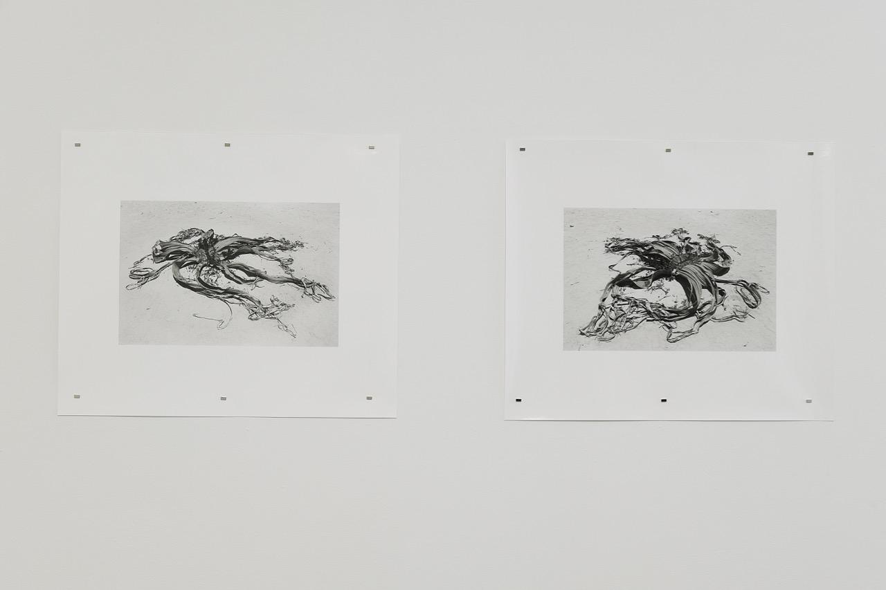 UNA SZEEMANN, Welwitschia Mirabilis, Lambada Prints auf Brytpapier, jek 50 x 50 cm, 2018